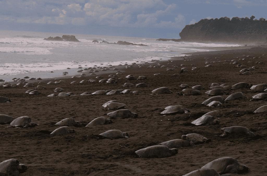turtle beach india